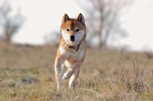 Hundefotografie von Christine Bamberger
